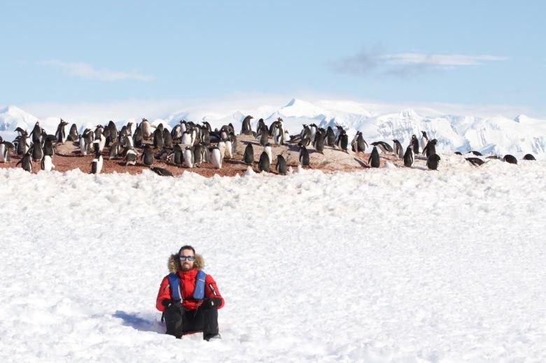 Pingüinos de Papua.